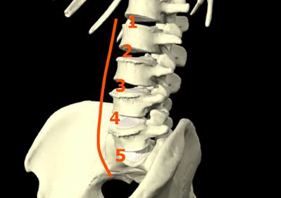 lumbar-spine-anatomy-101